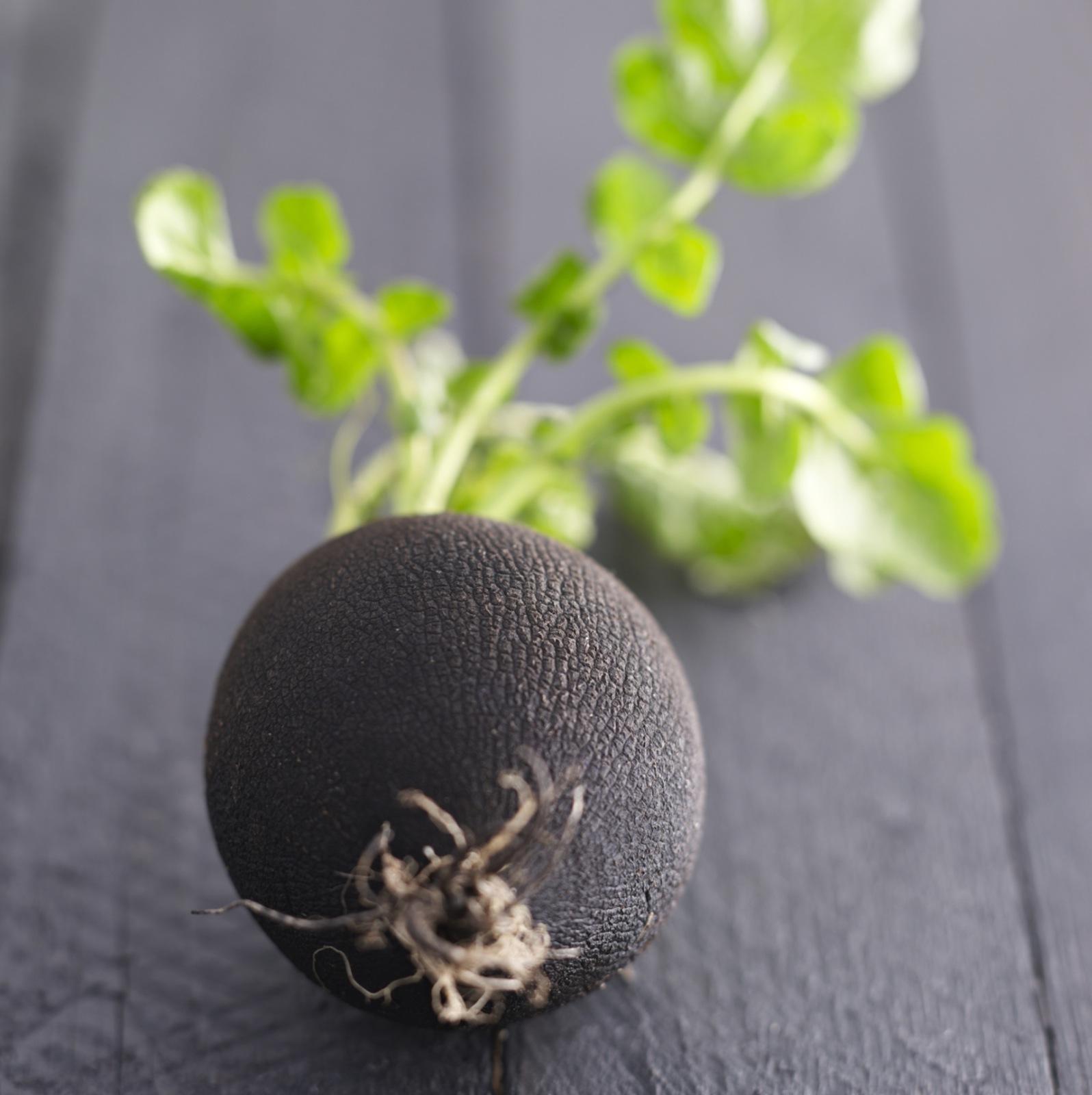 radis noir recettes vid os et dossiers sur radis noir cuisine actuelle. Black Bedroom Furniture Sets. Home Design Ideas