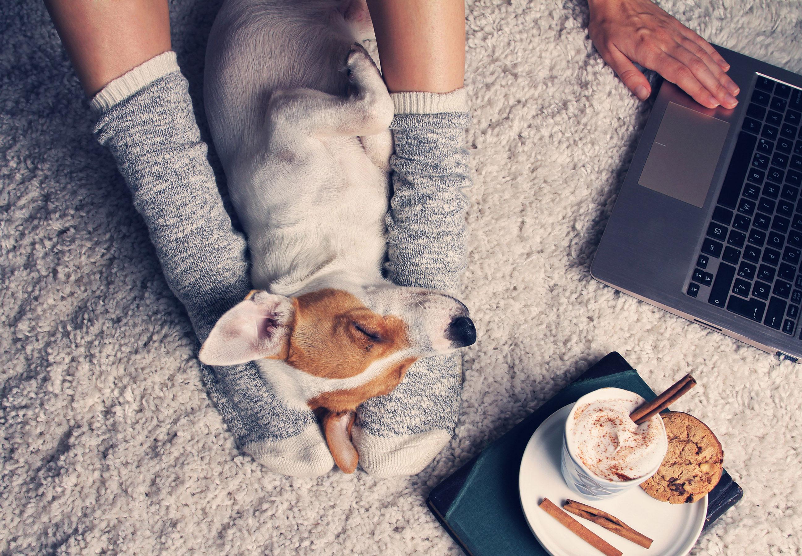 Une appli s'inspire de Tinder pour des rencontres entre propriétaires de chiens
