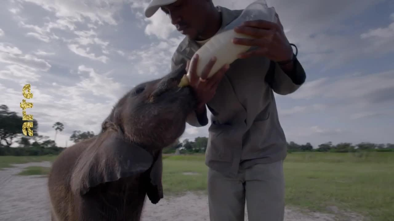 Naledi, l'éléphanteau orphelin - 4 janvier