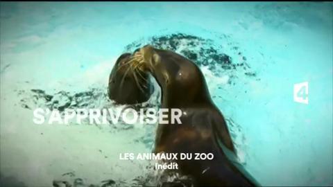 Les animaux du zoo (France 4) Jeudi 31 décembre