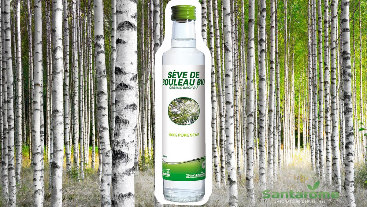 Au coeur de la forêt finlandaise avec Santarôme et sa Sève de Bouleau Bio