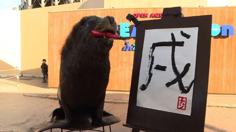Japon: un lion de mer fait de la calligraphie à Yokohama