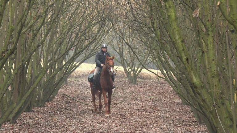 Italie: un médecin rend visite à ses patients à cheval