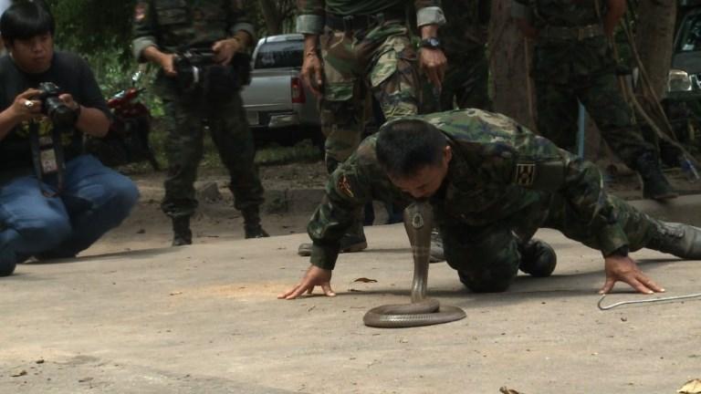 Thaïlande: du sang de cobra au menu des soldats