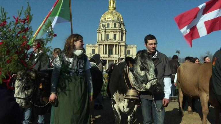 Salon de l'agriculture : vaches et brebis dans les rues de Paris