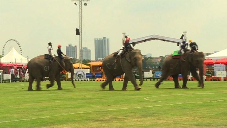Au cœur de Bangkok, des éléphants joueurs de polo