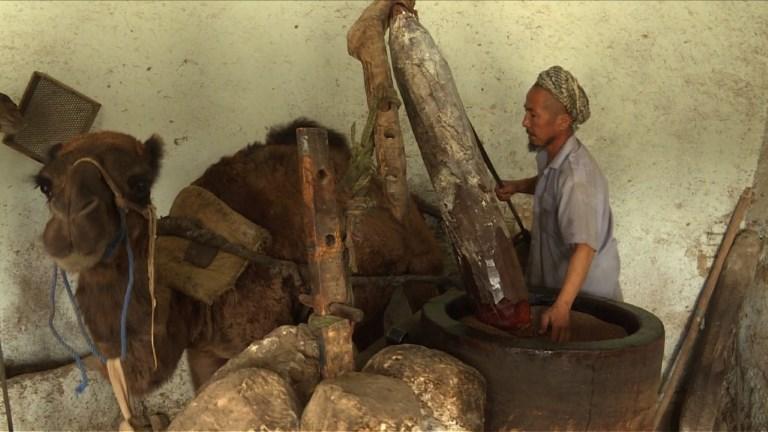 Afghanistan : du sésame et un chameau pour une huile précieuse