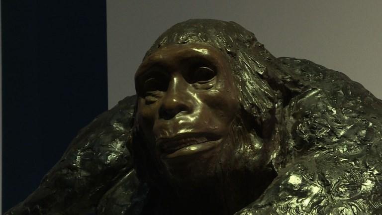 L'homme de Néandertal, notre cousin pas si lointain