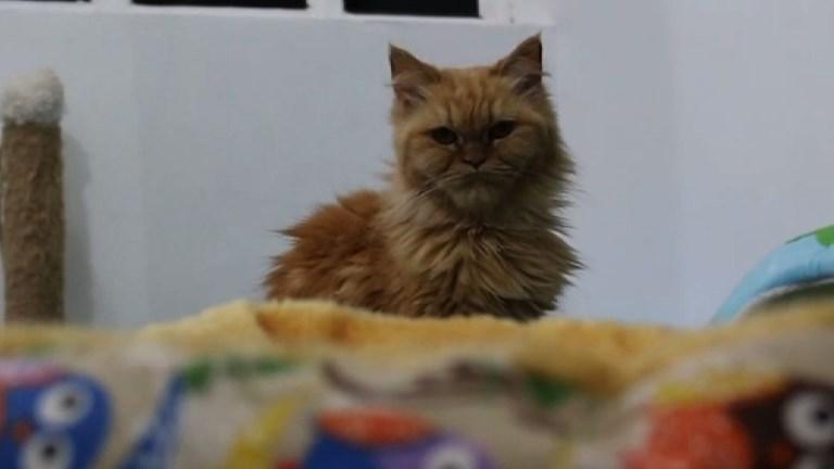 Dans la ville irakienne de Bassora, les chats ont leur hôtel